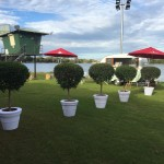 Topiary with White Covers