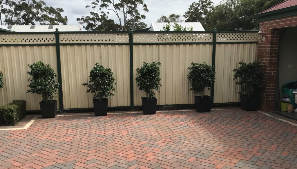Ficus Charcoal Pots