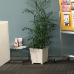 Large Bamboo Palm c