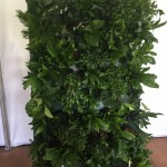 Single Plant Wall