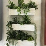 Feature Plants for Custom Wall
