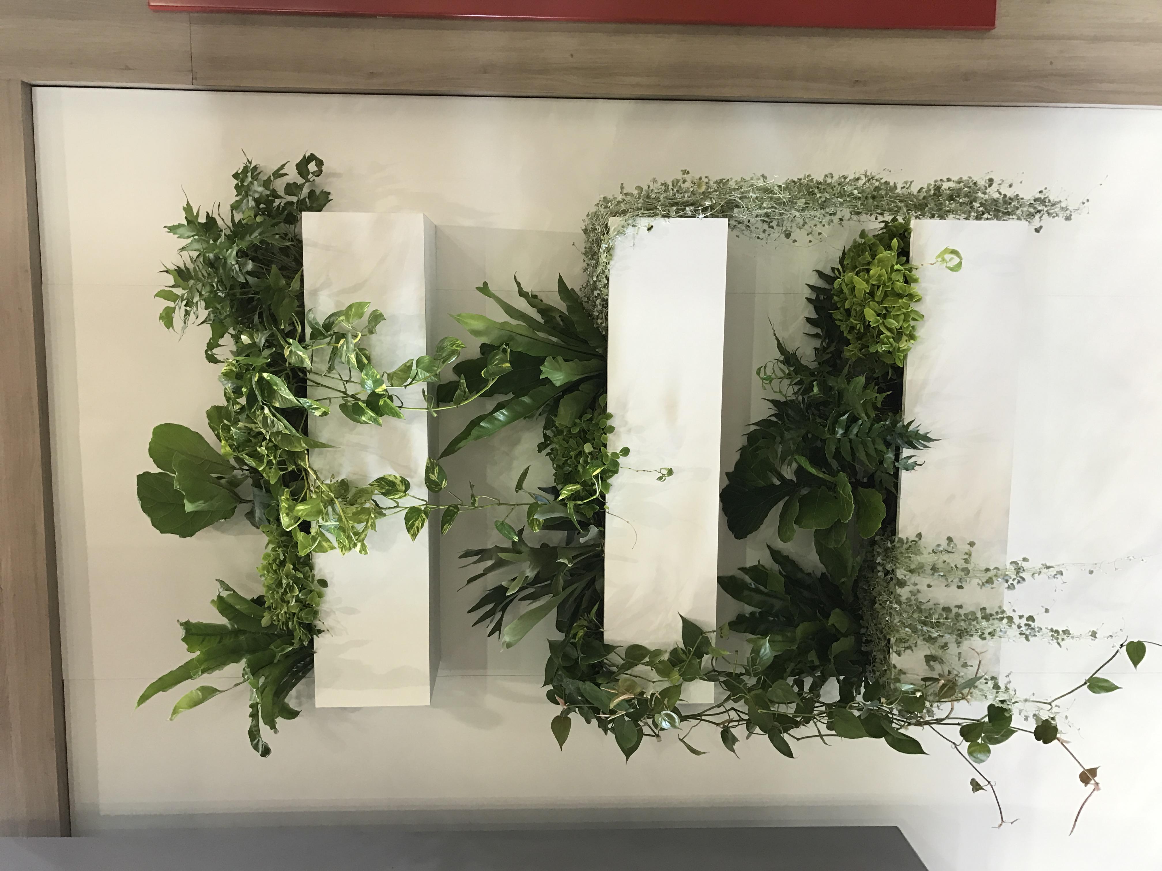 plant types mr pot plants. Black Bedroom Furniture Sets. Home Design Ideas