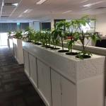 Amate Custom Planter
