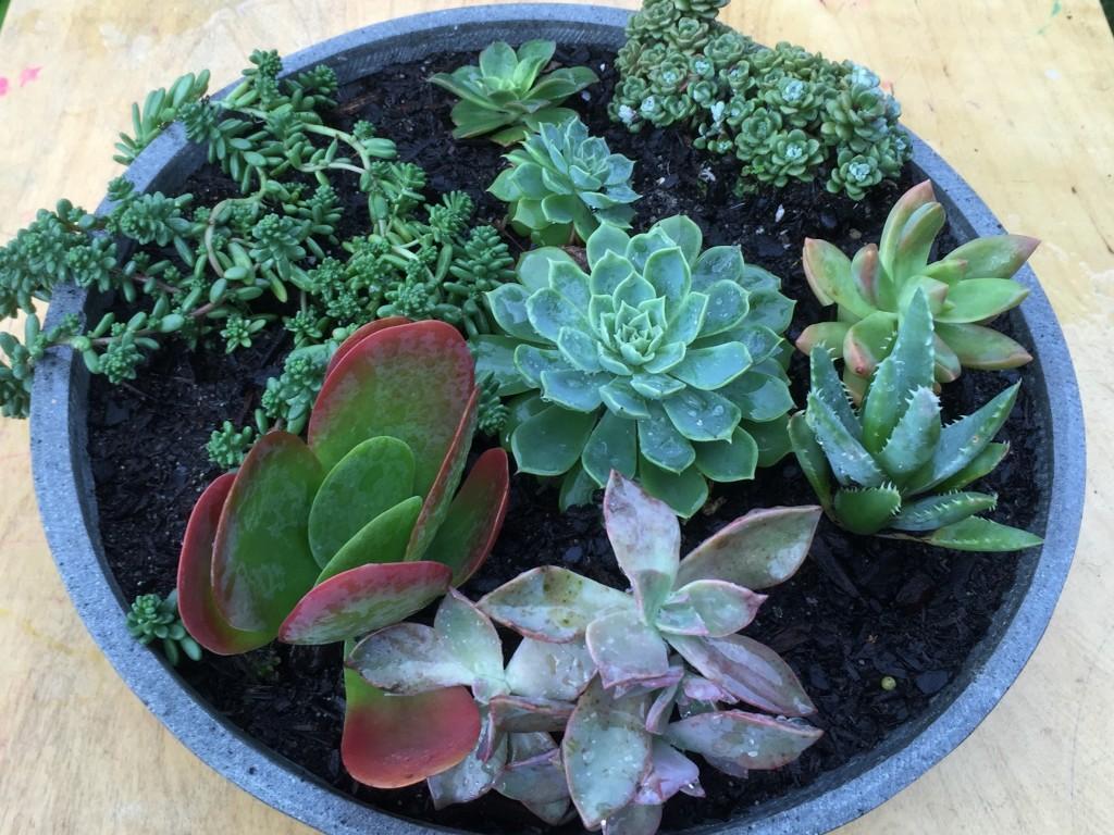 Succulent Bowl low