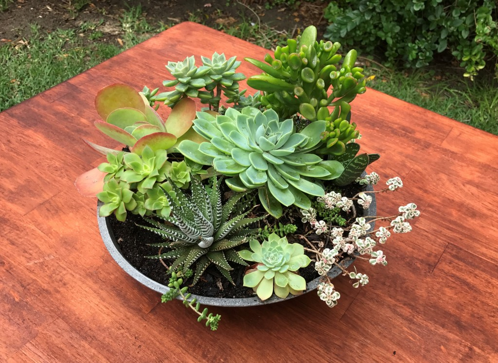 Succulent Bowls low - great centrepiece for tables