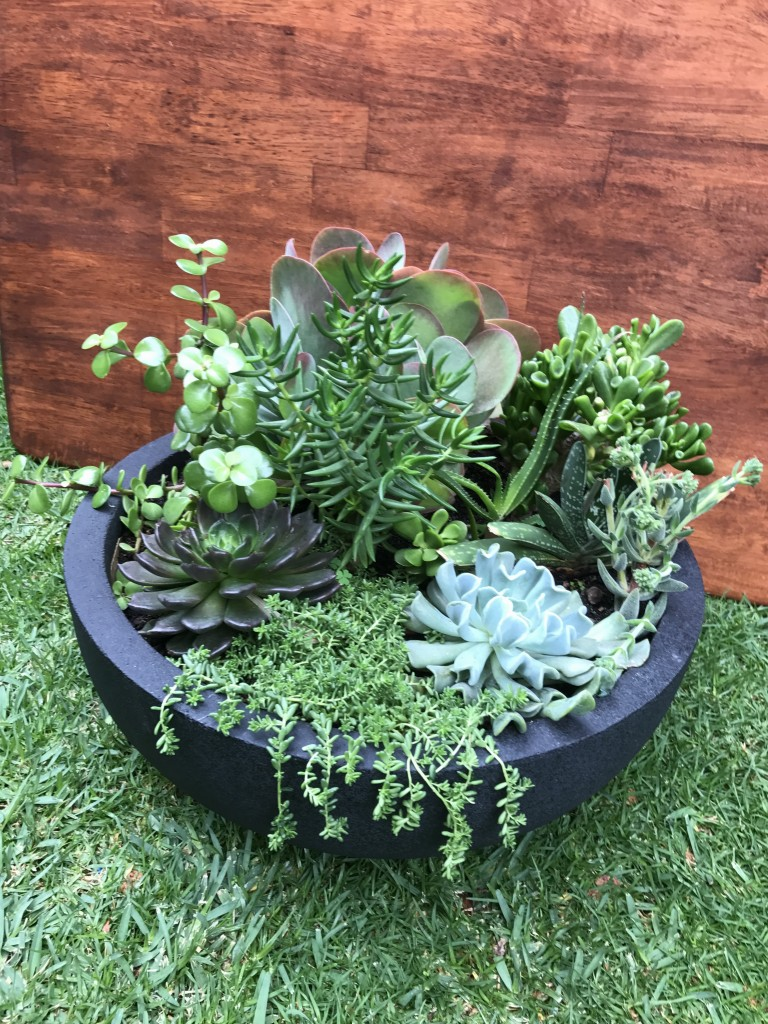 Succulent Bowl - Large 45cmD