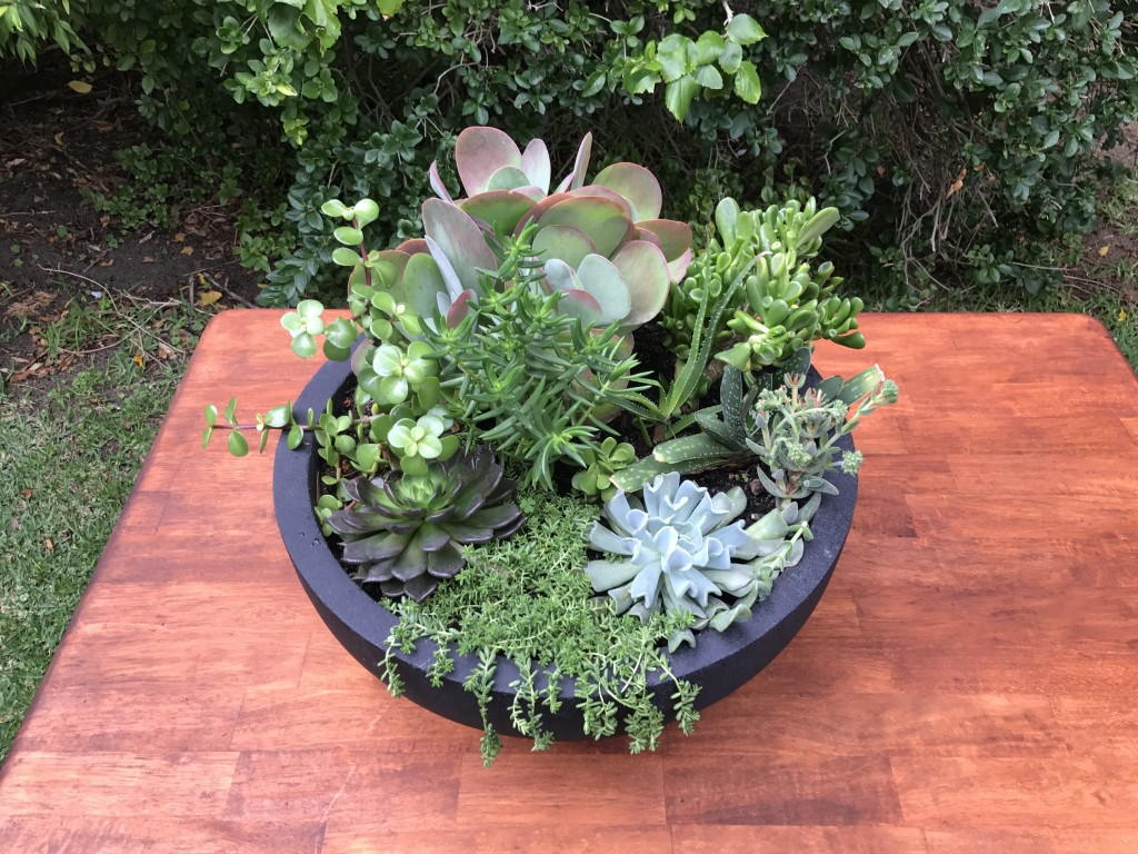 Medium Succulent Feature