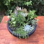 Medium Succulent Feature