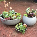 Succulent Feature Pots in Grey and Black