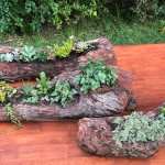 Rustic Logs with Succulents
