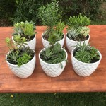 White Diamond Pots with multi- planted succulents