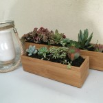 Succulents in Bamboo Boxes