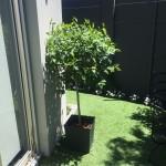Moreton Topiary