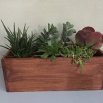 Succulents in Wooden Boxes
