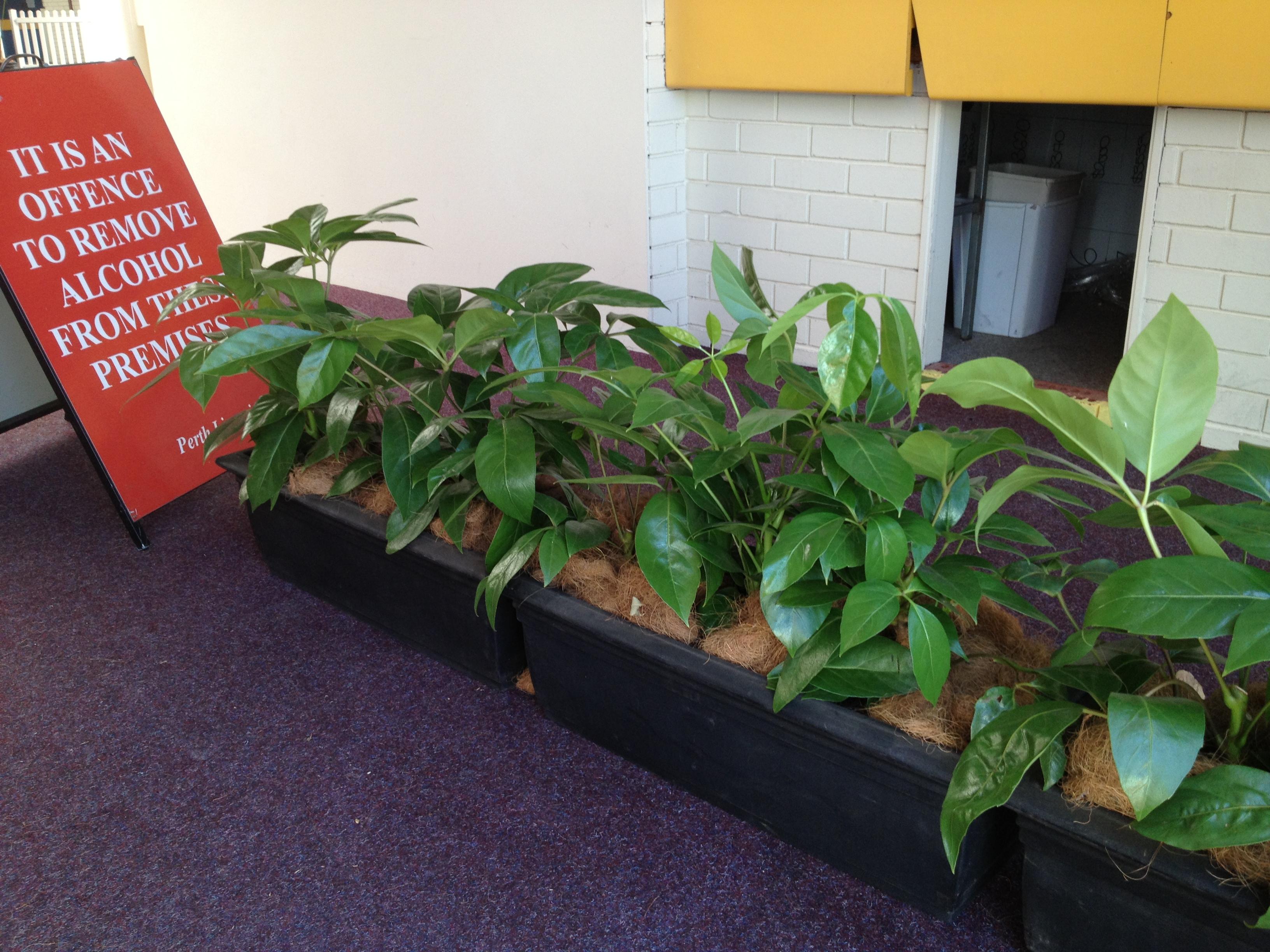 Plant types mr pot plants - Suitable indoor plants ...