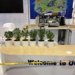 Succulent Table Plants