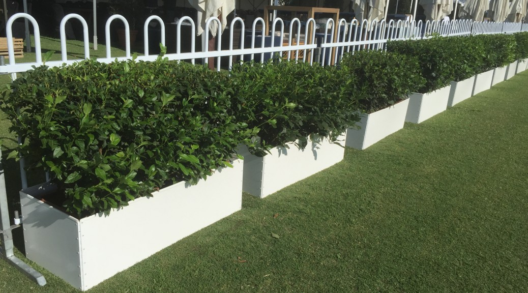 Large Hedges with White Surrounds