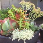 Succulent Bowls - Ex Large 60cmD