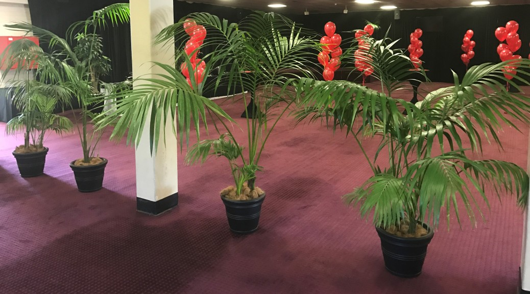 Kentia Palms in Black Pots (2)