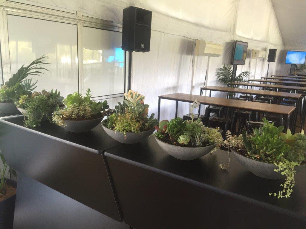 Succulent Low Bowls