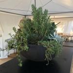 Succulent Feature Bowl