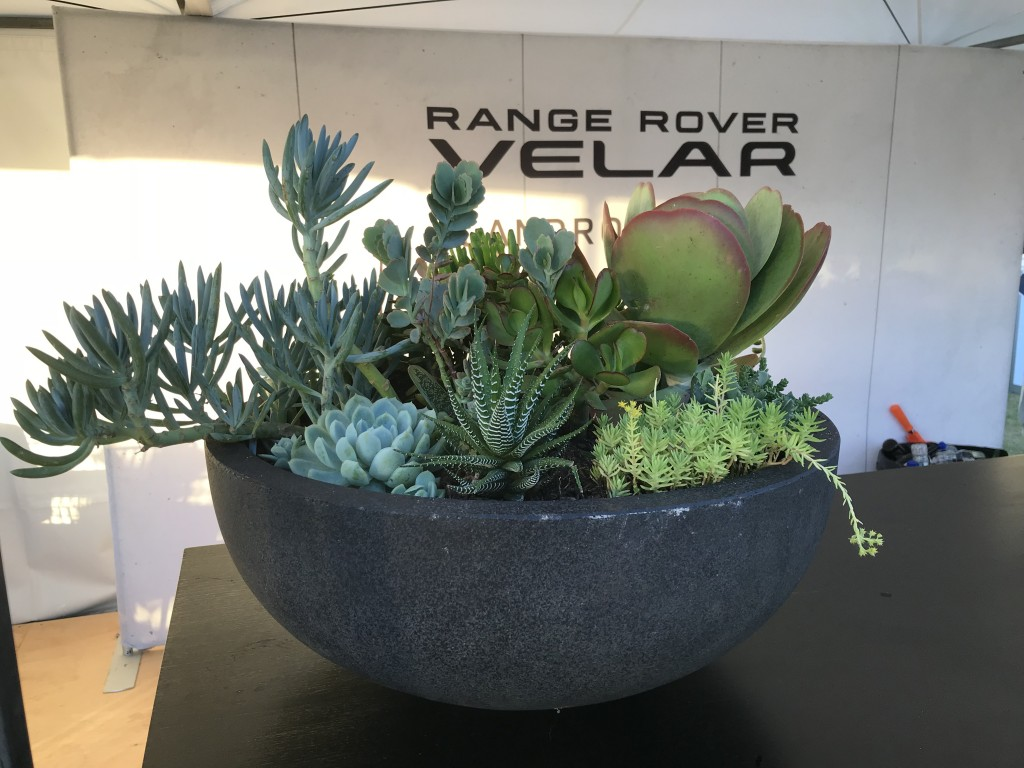 Succulent Feature Bowl