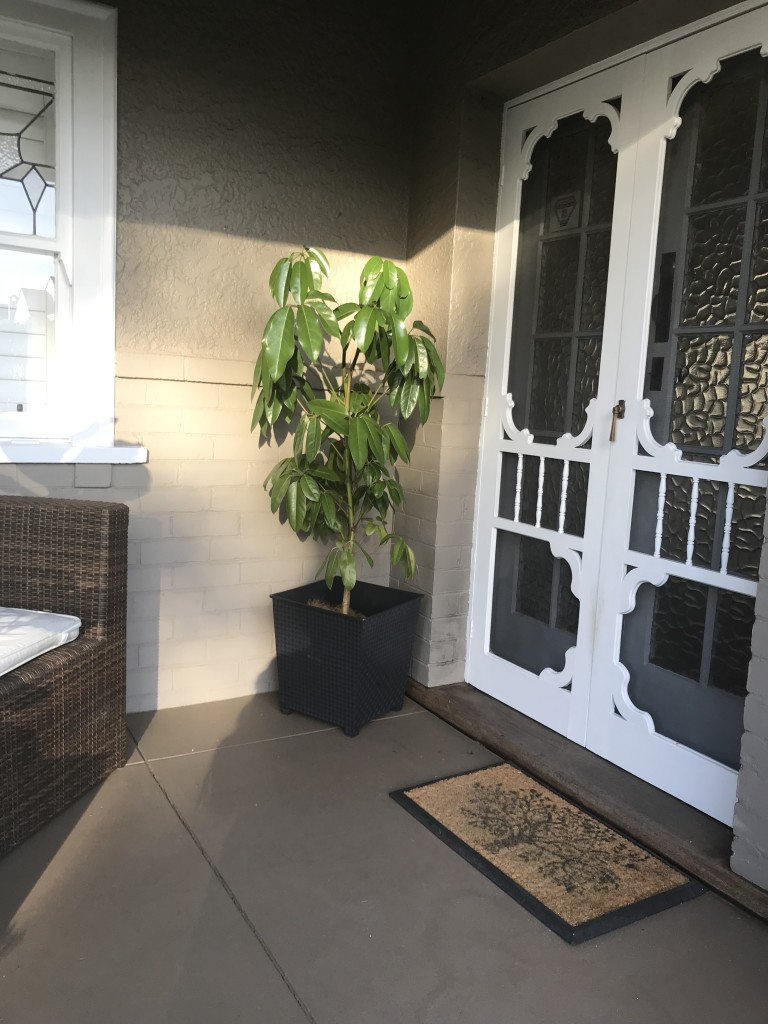Display Home South Perth Umbrella and Fiddle Leaf Fig (8)