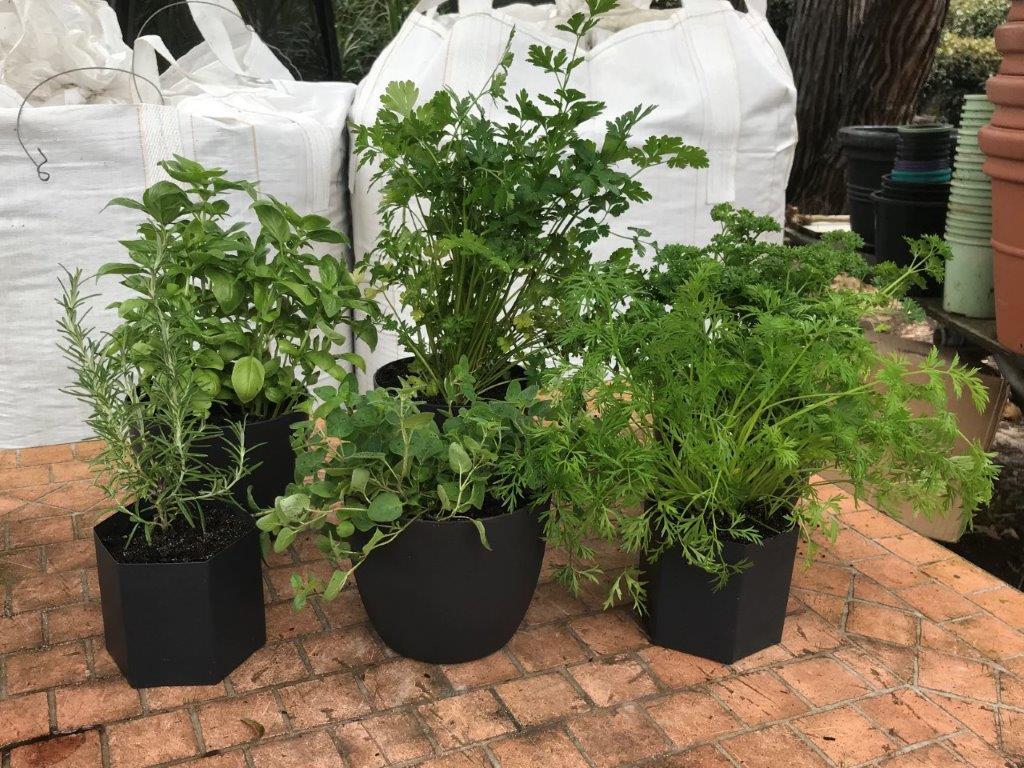 Herbs in Dark Charcoal Pots