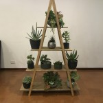 Succulent Sml pots on Ladder Display (2)