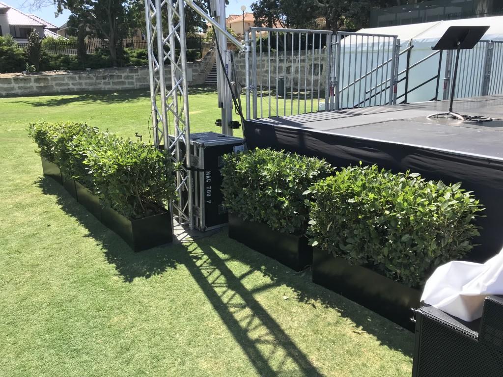 Large Hedges BLack Surrounds