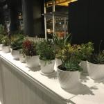 Succulent White Pots Various (1)