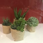 Succulents wrapped in hessian (4)