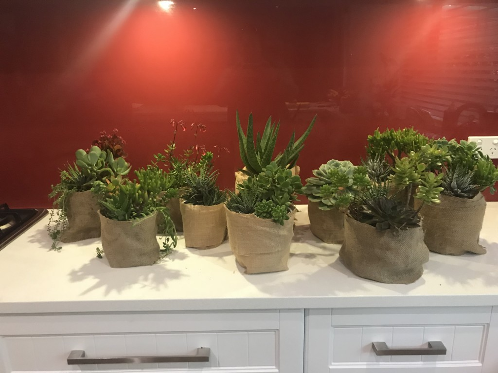 Succulents wrapped in hessian (5)